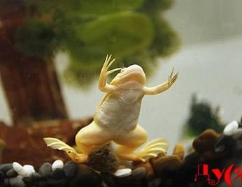 Лягушка в аквариуме