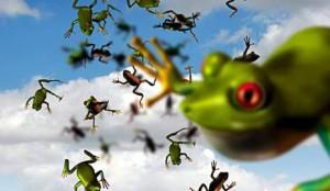 Лягушка – предвестница дождя