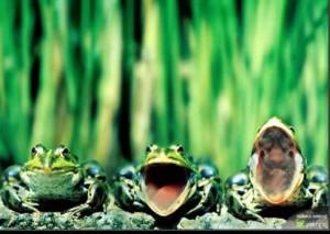 Народные прозвища, приметы, поговорки о лягушках