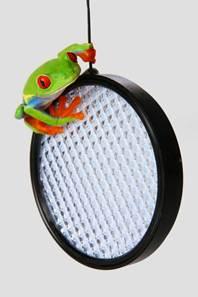 Содержание дома лягушек и жаб