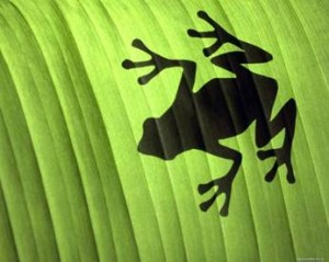 Библейское значение лягушек