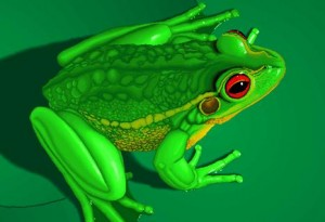Биология зеленых лягушек