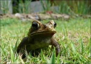 Проблемы промысла зеленых лягушек